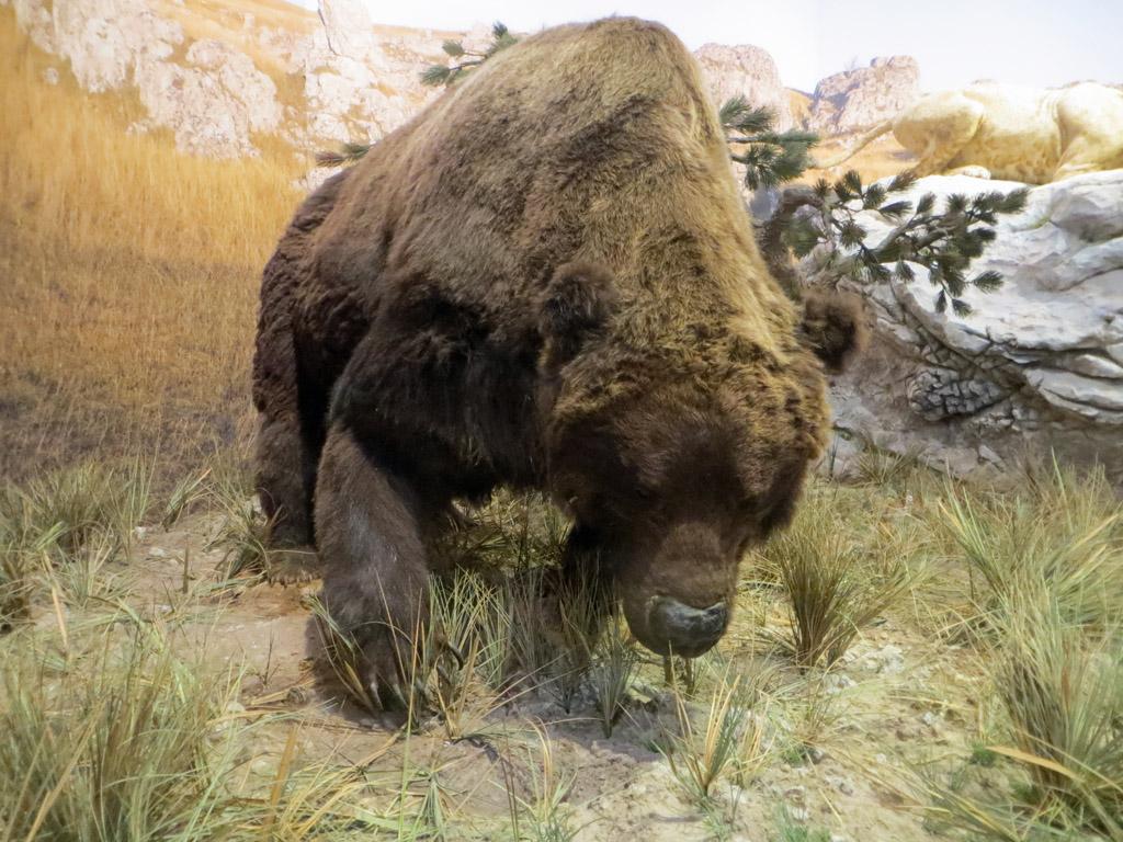 ours sur les plathelminthes)